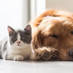 STJ decide que condomínios não podem proibir pets em casa